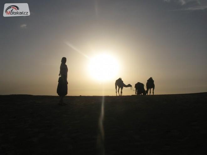 Saharský Bandita