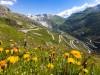 Švýcarské vyhlí