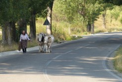 Kráèí po silnici, vede si dvì kravky a nìjakej kamion, co jede kolem, jí nerozhodí, natož motorka.