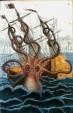 kraken.99