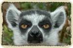 Lemur.R1