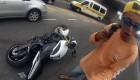 Zastøelen pøi krádeži motocyklu